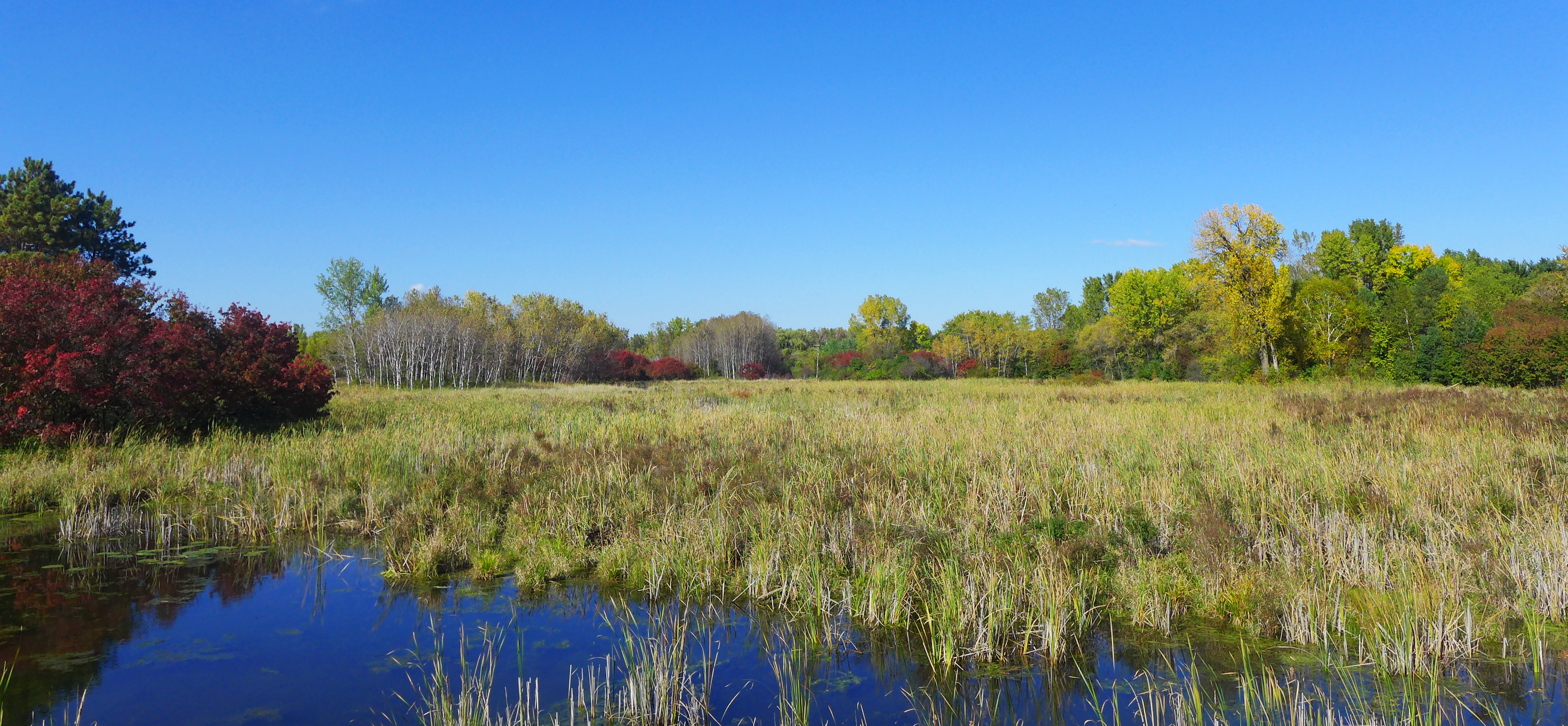 Birch Lake Wetland - Fall.png
