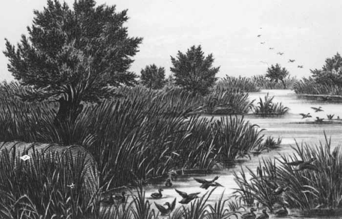 Goose Lake historic sketch.png